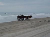 horses-on-beach-3