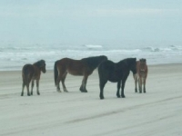 horses-on-beach-6
