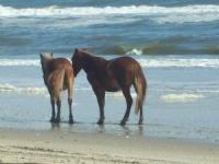 horses-on-beach-7