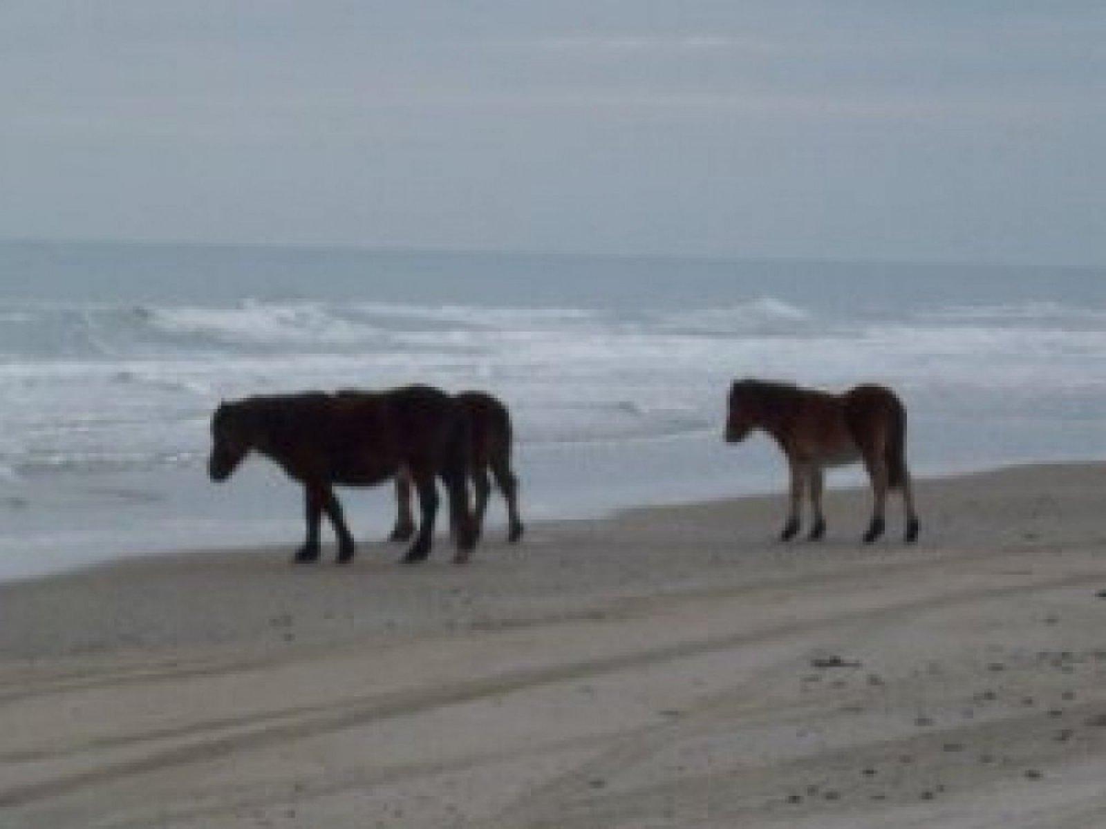 horses-on-beach-1