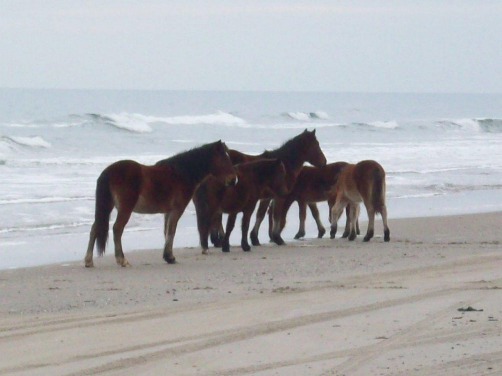 horses-on-beach-2