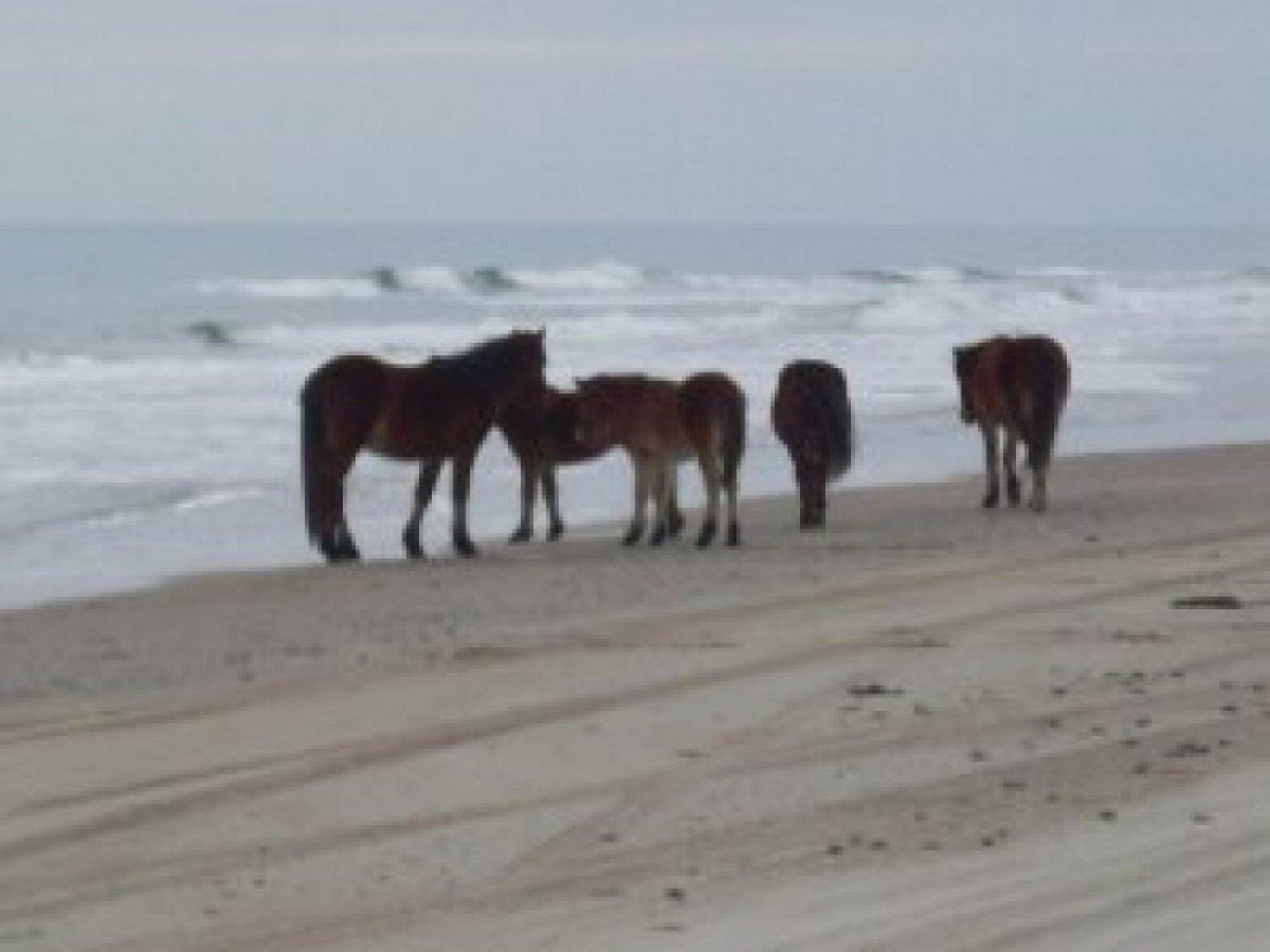 horses-on-beach-4