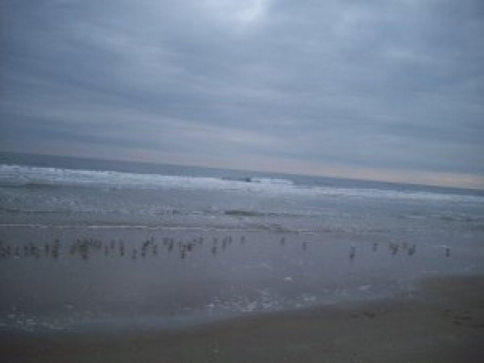 plovers-on-the-beach